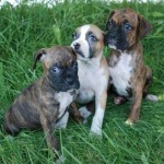 Amelia Pups 10Jul09 144