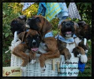 Daisy Puppies 27Jul12 01
