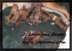 Luna Puppies 5May16 02