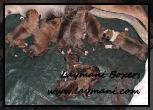 Luna Puppies 5May16 03